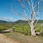 Wandelen door de wijngaarden